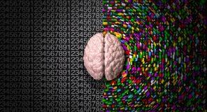 mozek uvodni