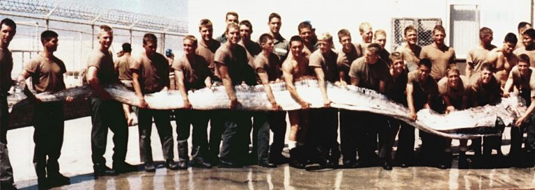 The photograph was actually taken in 1996 and shows a giant oarfish (Regalecus glesne) found on the shore of the Pacific Ocean near San Diego, California. This extremely rare specimen was 23 ft (7.0 m) long and weighed 300 lb (140 kg). The original photograph can be seen on page 20 of the April 1997 issue of All Hands.