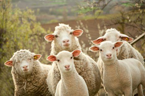 Foto: 5 chytrých zvířat, která jíme