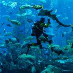 Takhle vypadají nejúchvatnější akvária na světě!