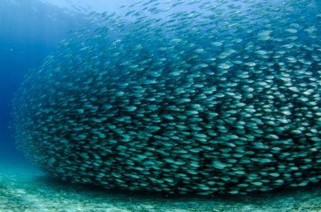 Aby došlo k migraci, musí teplota vody klesnout pod 21 ° C.