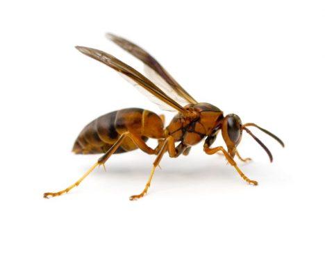 Foto: Bystřejší hmyz, než se zdálo: Rozpozná obličeje!
