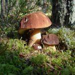 Představujeme šokující účinky hub, o kterých jste neměli ani tušení!