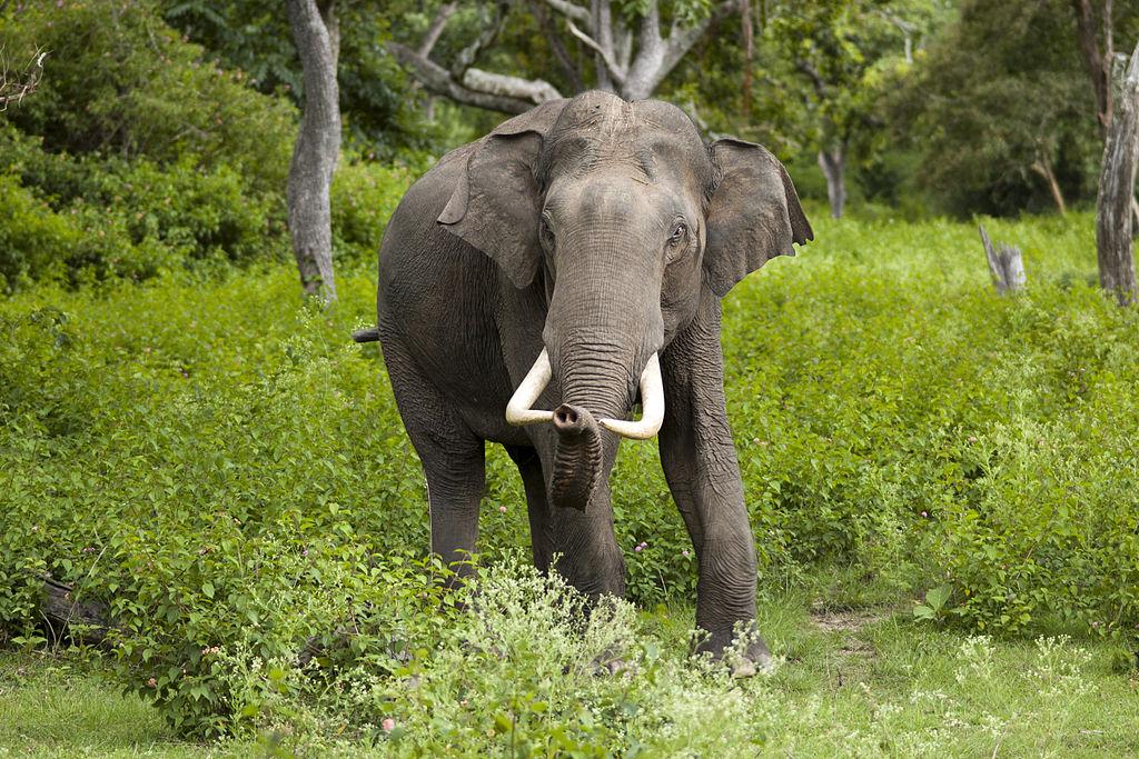 sloni.titulka