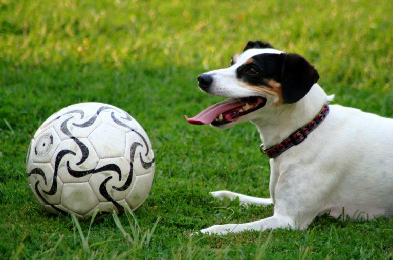 soccer dawg 4