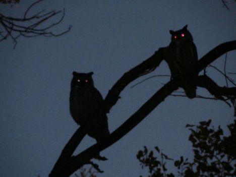 Foto: Kdo odpoví, zemře! Aneb strašidelné příběhy o hejkalech