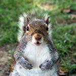 squirrel-post4