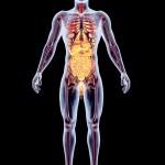Jak moc znáte svoje tělo? Otestujte se!