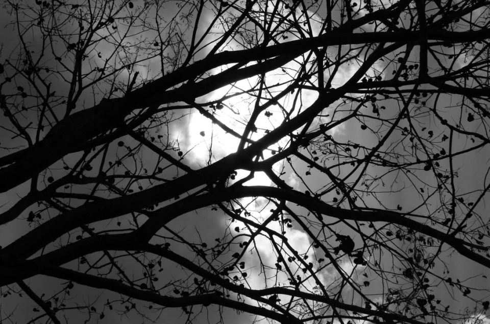 the_dark_day_by_vickie666-d5be4i5
