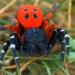 5 nejjedovatějších druhů hmyzu vČR: Nemáme tu jen vosy a sršně!