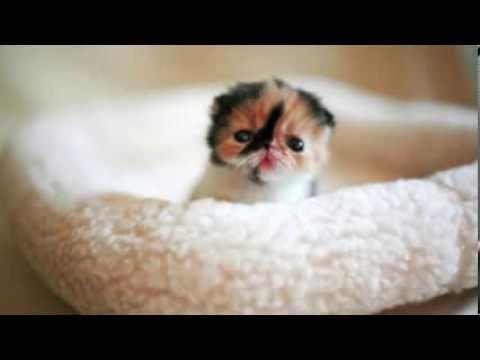Tohle vás zaručeně dojme: Takhle vypadají nejroztomilejší zvířata na světě!