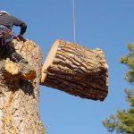 VIDEO: Kácení stromu, jak jste ještě neviděli!