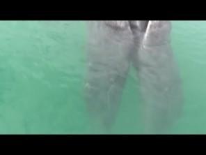 V Mexiku byla objevena první velrybí siamská dvojčata!