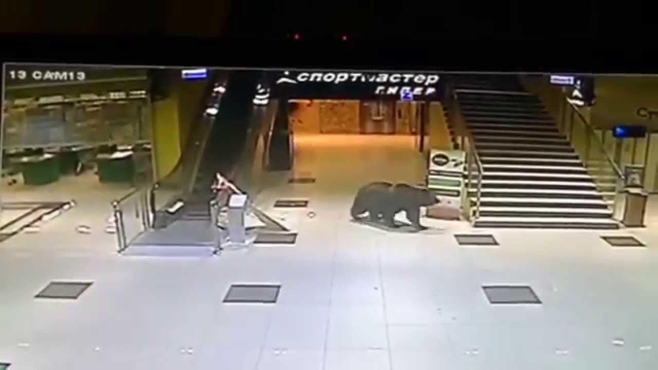 VIDEO: Do nákupního centra se vloupal medvěd!