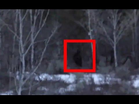 VIDEO: Kde se prochází nebezpečný příbuzný Yettiho?