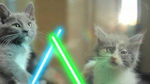 VIDEO: Kočičí rytíři Jedi!