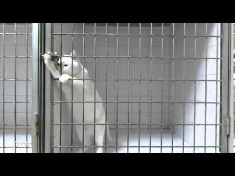 VIDEO: Kočičí útěk z vězení