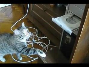VIDEO: Kočka umí používat DVD mechaniku!