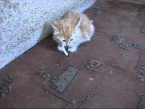 VIDEO: Koťátko závislé na cigaretě