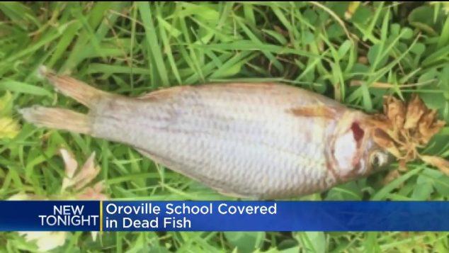 VIDEO: Na školáky čekala rybí záhada