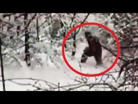 VIDEO: Nové pozorování Bigfoota!