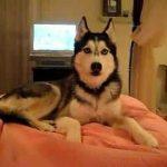 VIDEO: Pes mluvící lidskou řečí!
