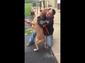 VIDEO: Pes se po dvou letech shledal s páníčkem!