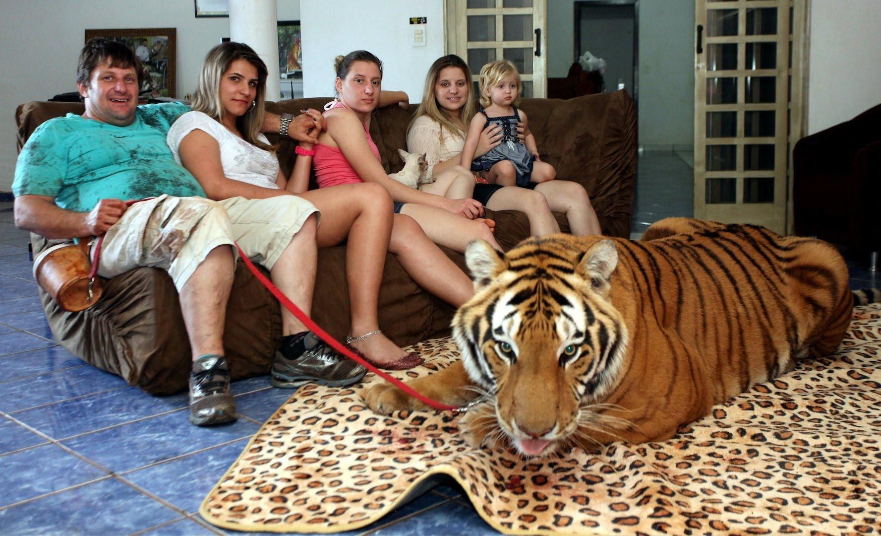 VIDEO: Rodina žije doma s tygry!