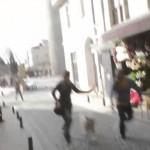 VIDEO: Skutečný King Kong zaútočil na Istanbul!
