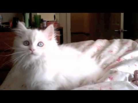 VIDEO: Smějící se kočka!